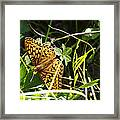 Butterfly At Signal Mountain Framed Print