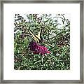 Butterfly Bush Framed Print