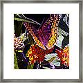 Butterfly Don't Fly Away Framed Print