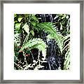 Butterfly Farm - Phuket Thailand - 011338 Framed Print