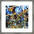 Butterfly Goodbye Framed Print