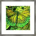 Butterfly Mimetism Framed Print by Jo Ann