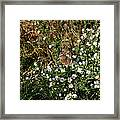 Butterfly On White Flowers Framed Print