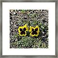 Butterfly Pansies Framed Print