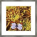 Butterfly Resting On Mums Framed Print
