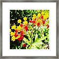 Butterfly Weed 2 Framed Print