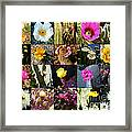 Cactus Collage Framed Print