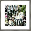 Cactus Family 3 Framed Print