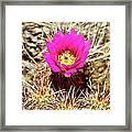 Cactus Flower Palm Springs Framed Print