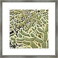 Cactus  Framed Print by Merrick Imagery