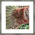 Cactus Framed Print by Sharon McLain