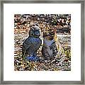 Calico Cat And Obtuse Owl Framed Print by Al Powell Photography USA