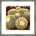 California Barrel Cactus Framed Print