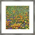 California Poppies And Desert Blubells Framed Print