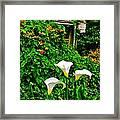 Calla Lilies Vertical Framed Print