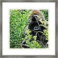 Can I Help You? Framed Print