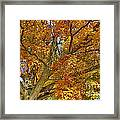 Canadian Tree 2012 Framed Print