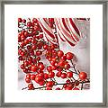 Candy Canes And Red Berries Framed Print