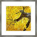 Canopy Of Autumn Leaves Framed Print