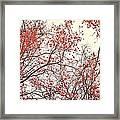 canopy trees II Framed Print by Priska Wettstein