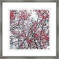 Canopy Trees Framed Print