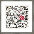 Cape Cod Beach Rose In Fresh Snow Framed Print