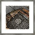 Captured Crawdaddies Framed Print