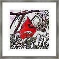 Cardinal Snowbound Framed Print