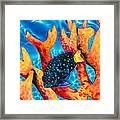 Caribbean Damselfish Framed Print