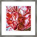 Carnation Watercolor Framed Print