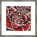 Carnations Framed Print