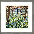 Carpet Of Blue Flowers In Spring Forest Framed Print by Elena Elisseeva