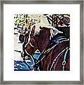 Carriage Horse Framed Print
