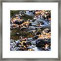 Cascading Autumn Leaves On The Miners River Framed Print