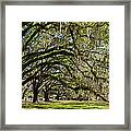 Cascading Oaks Framed Print