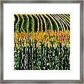 Cash Crop Corn Framed Print