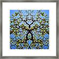 Catalpa Tree Framed Print