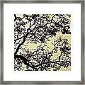 Catalpa Tree Gold Framed Print