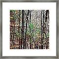 Cathedral In The Woods Framed Print