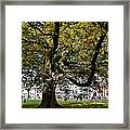 Cathedral Square - Exeter Framed Print