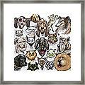 Cats And Dogs Framed Print