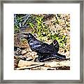 Caw And Friend Framed Print