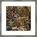 Cchestnut Tree In Autumn Framed Print