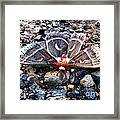Cecropia Moth Blending In Framed Print