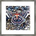 Cecropia Moth Framed Print