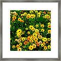 Celebration Of Yellows And Oranges Study 3 Framed Print