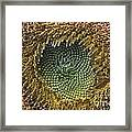 Center Of The Sunflower Framed Print