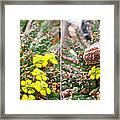 Chafer Beetle On Medusa Succulent In 3d Stereo Framed Print