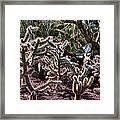 Chainfruit Cholla Framed Print