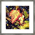 Changing Season Framed Print by Candice Trimble